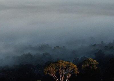 غابات ماليزيا عمرها اكثر من 130 مليون سنة (29)