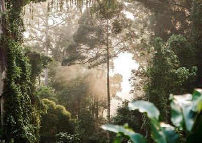 غابات ماليزيا عمرها اكثر من 130 مليون سنة (3)