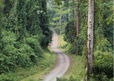 غابات ماليزيا عمرها اكثر من 130 مليون سنة (4)
