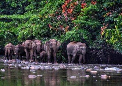 غابات ماليزيا عمرها اكثر من 130 مليون سنة (6)