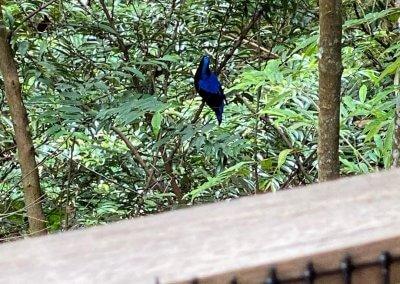 فندق داخل غابة يبعد ساعه عن كوالالمبور (40)