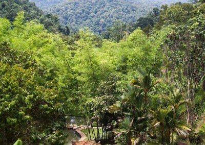 فيلا تقع في اعماق الغابات الاستوائية (26)