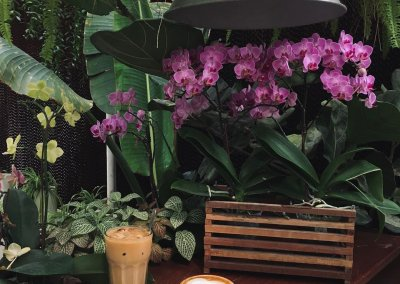 كافيه داخل مشتل وورد ونباتات (1)
