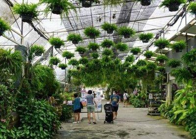 كافيه داخل مشتل وورد ونباتات (10)