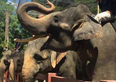 كوالا جاندا المركز الوطني لحماية الأفيال (12)