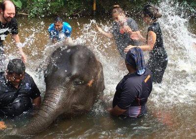 كوالا جاندا المركز الوطني لحماية الأفيال (2)