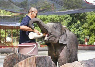 كوالا جاندا المركز الوطني لحماية الأفيال (3)