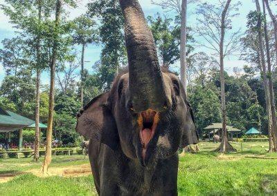 كوالا جاندا المركز الوطني لحماية الأفيال (4)