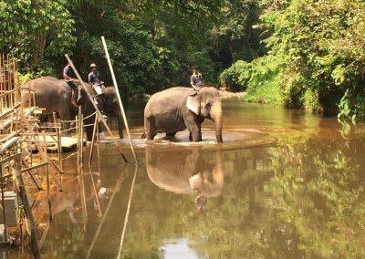 كوالا جاندا المركز الوطني لحماية الأفيال (5)