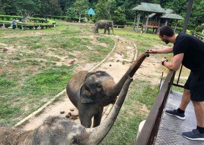 كوالا جاندا المركز الوطني لحماية الأفيال (6)