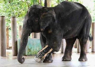 كوالا جاندا المركز الوطني لحماية الأفيال (8)