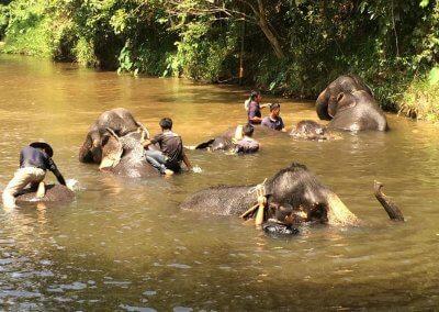 كوالا جاندا المركز الوطني لحماية الأفيال (9)
