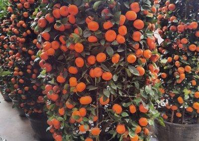 متجر لبيع الورود في كوالالمبور (10)
