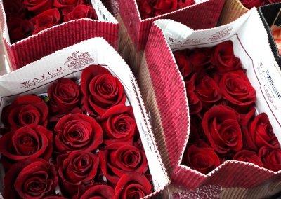 متجر لبيع الورود في كوالالمبور (4)