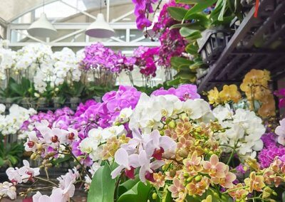 متجر لبيع الورود في كوالالمبور (7)
