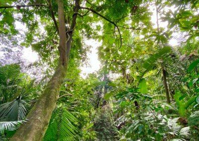مكان مخفي للتنزه في كوالالمبور (2)