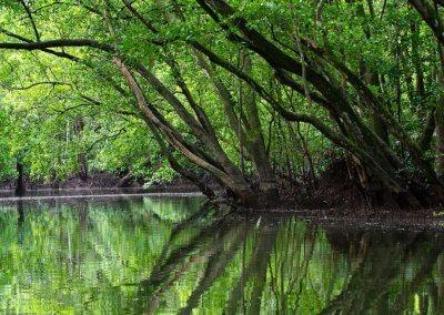 نهر المنغروف لكن هذه المره في جوهور بارو (2)