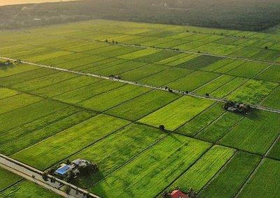هل جربت الاستيقاظ في مزارع الارز من قبل (1)