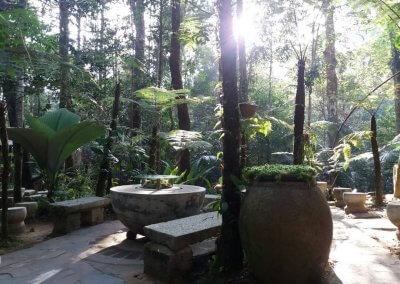 هل جربت تناول القهوة داخل غابة (5)