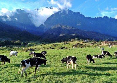 هل سبق لك تجربة منتجات Desa Dairy (2)