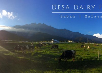 هل سبق لك تجربة منتجات Desa Dairy (4)