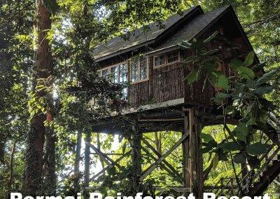 malaysia tree house (2)