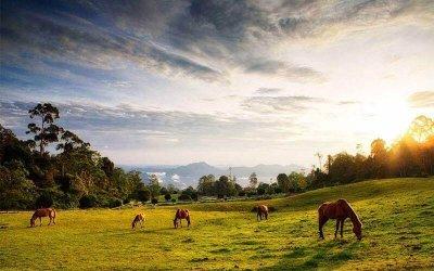 هدوء الطبيعة في مرتفعات بورنيو