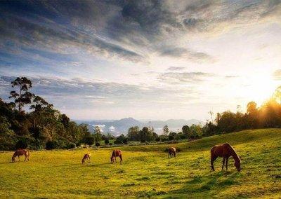 هدوء الطبيعة في بورنيو (1)